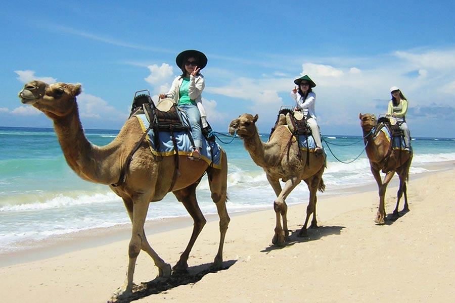 bali camel safari, hilton beach, nusa dua