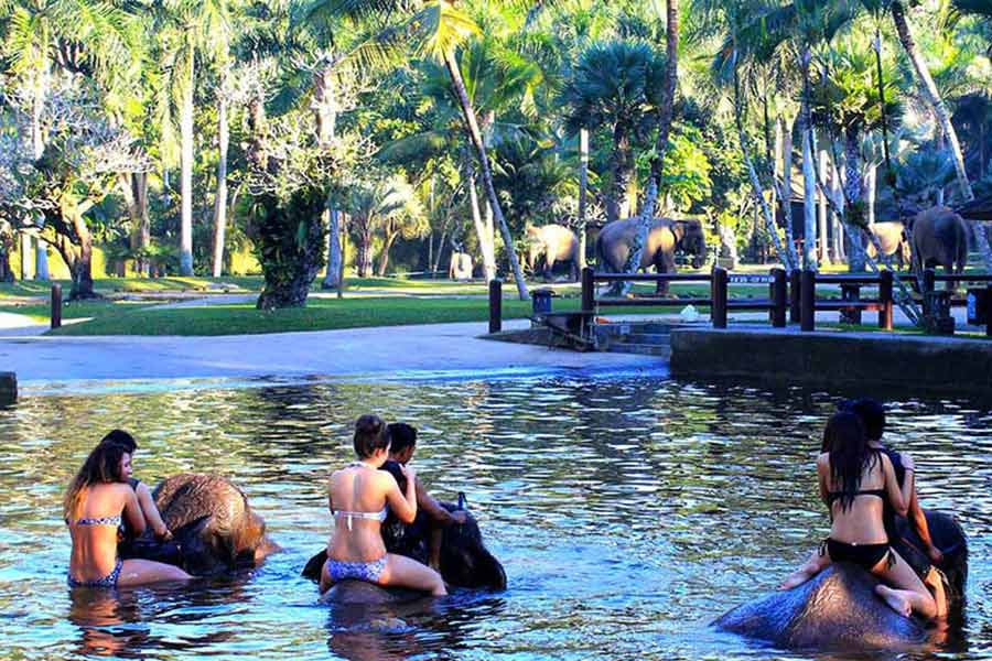 bathe with elephant, bali elephant tours