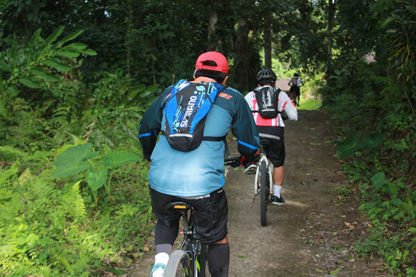 bike tour, jungle track, rice field, jatiluwih cycling tour