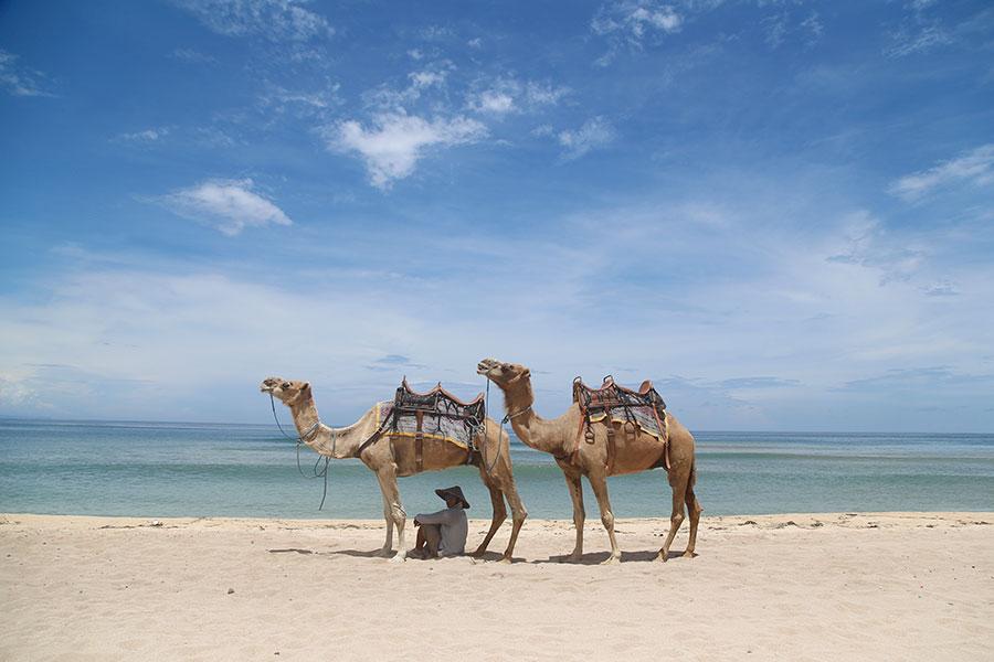 Camel instructor, hilton beach, camel safari