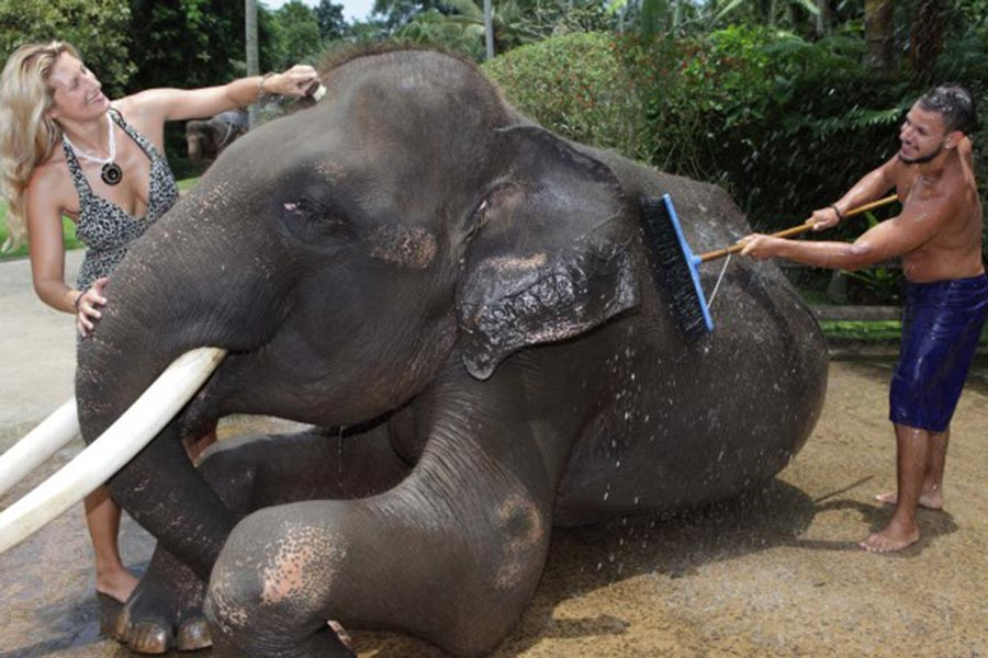 bathe with elephant, wash elephant
