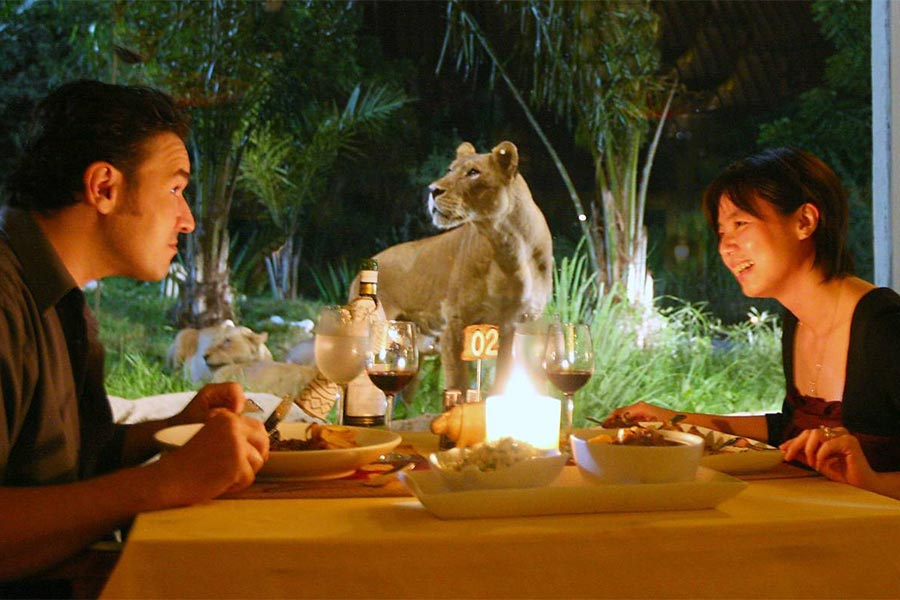 couple dinner. night safari package