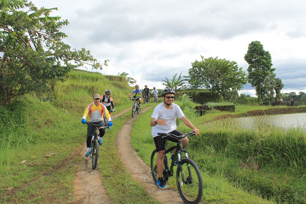 Cycling through rice field