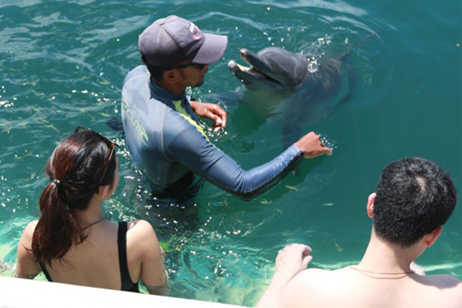 dolphin lodge interaction