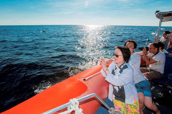 Dolphin cruise, Nusa dua, bali hai