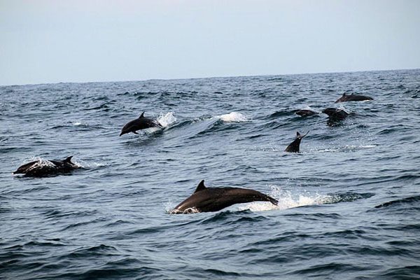 Dolphins Spot on the way to Nusa Penida