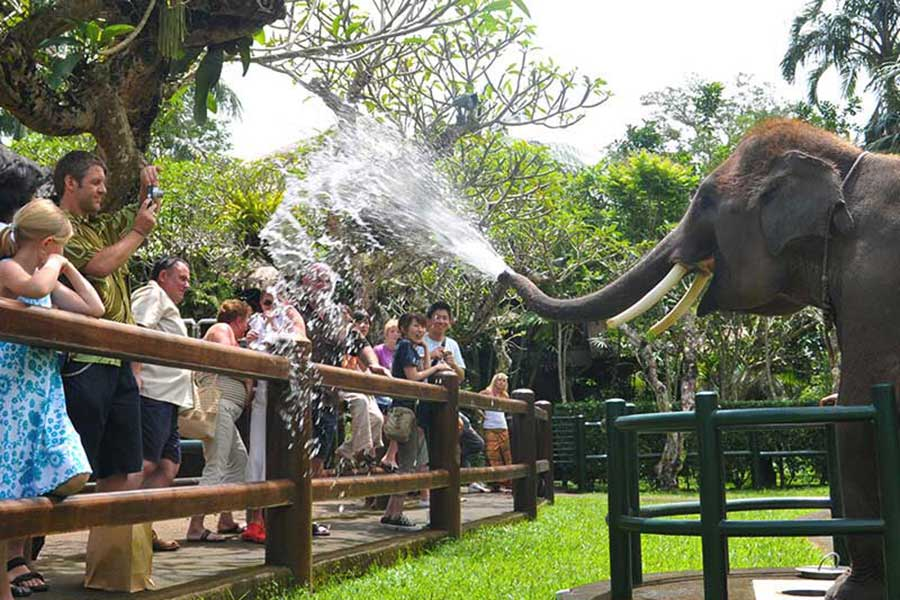 Elephant education show, elephant park, elephant safari ride