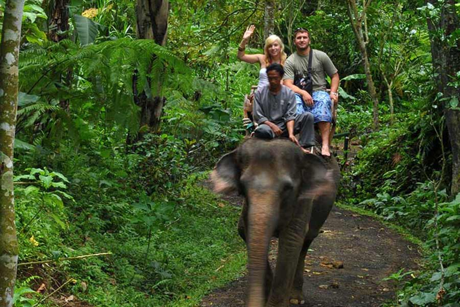 Elephant safari ride, taro park, taro jungle