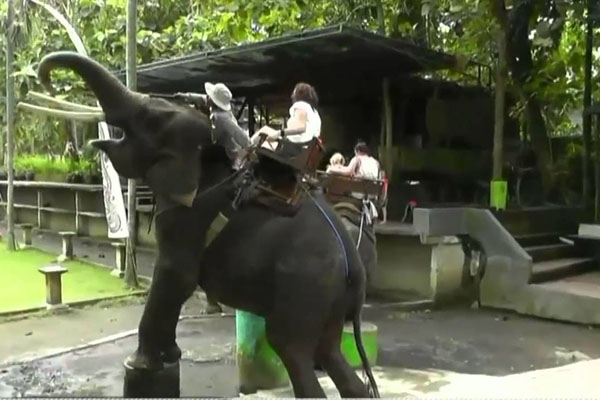 elephant, bakas, elephant riding