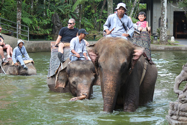 elephant riding, bakas elephant riding