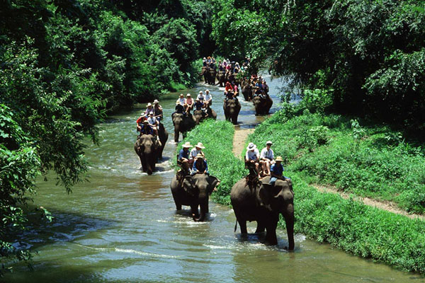 Elephant Riding to the jungle