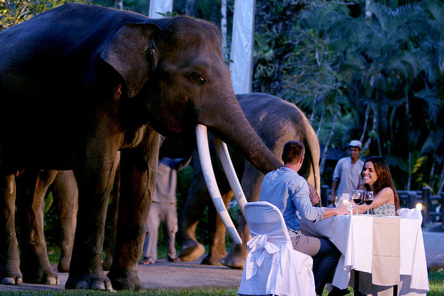 Gourmet set dinner, elephant safari under stars