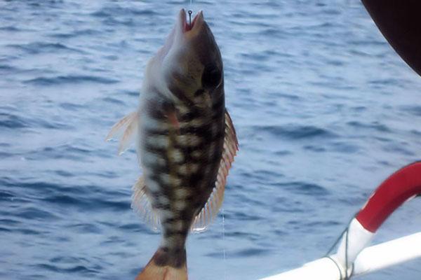 fishing nusa dua, bali fishing charter
