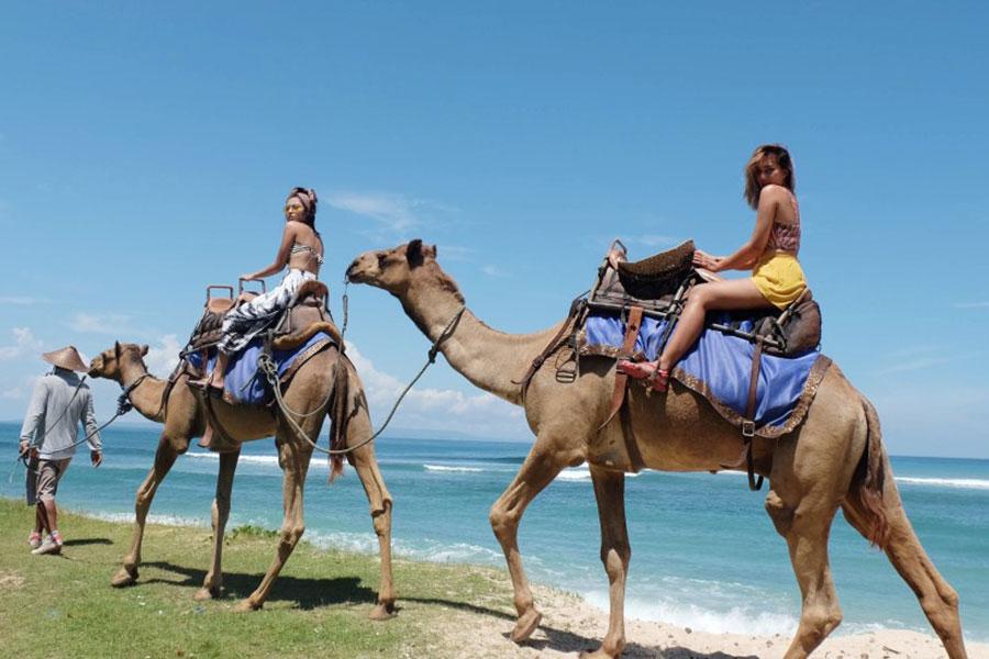 hilton beach, nusa dua, camel safari