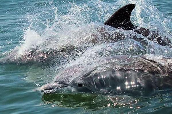 sea mammals, dolphins wild