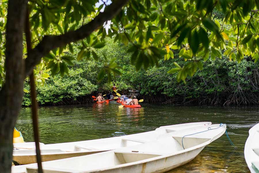 Mangrove tour, nusa lembongan