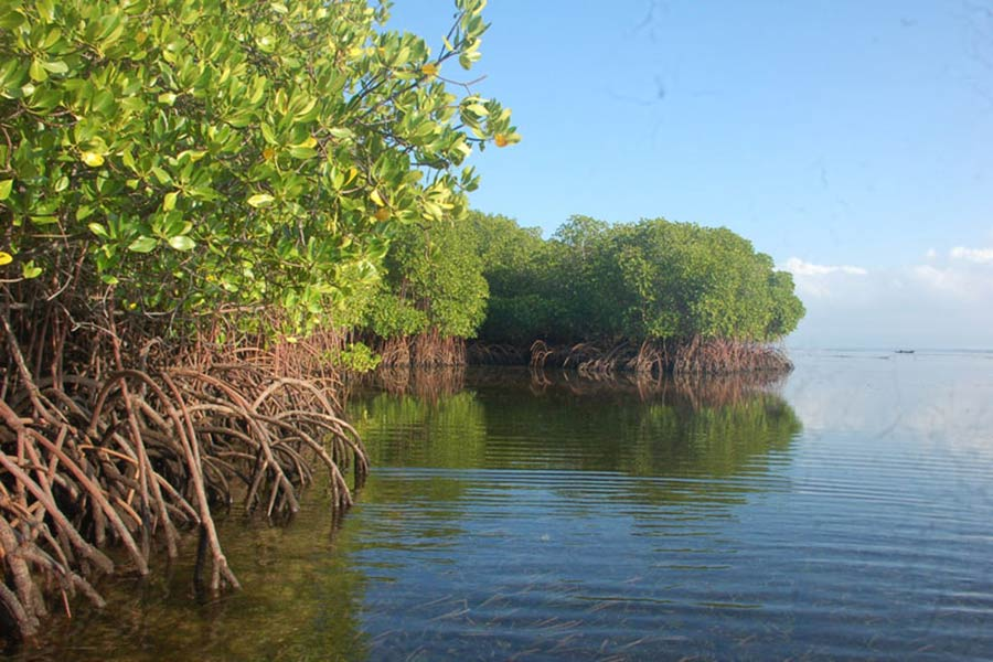 mangrove tour, lembongan one day trip