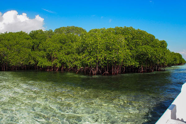 Mangrove tour with wooden boat in Lembongan Island
