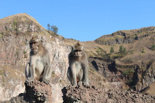 monkey, mount batur