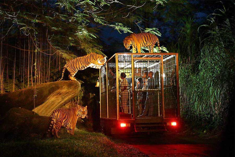 night safari package, bali safari