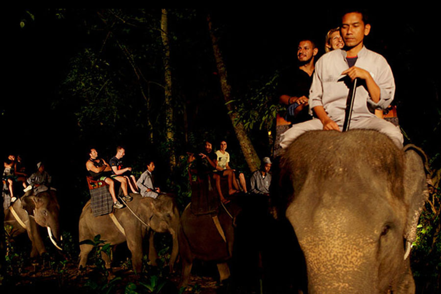 night safari under stars, mason adventure, elephant safari