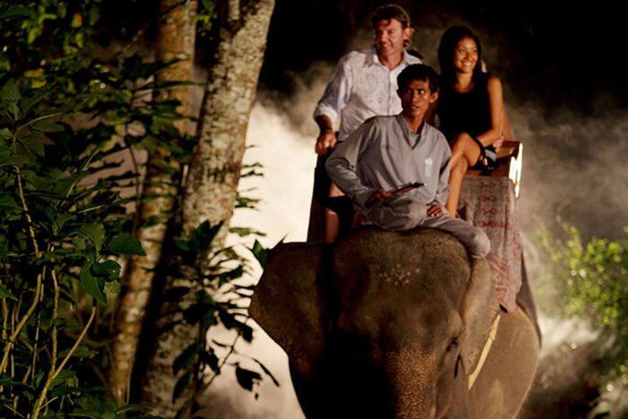 professional mahout, night safari, elephant tour