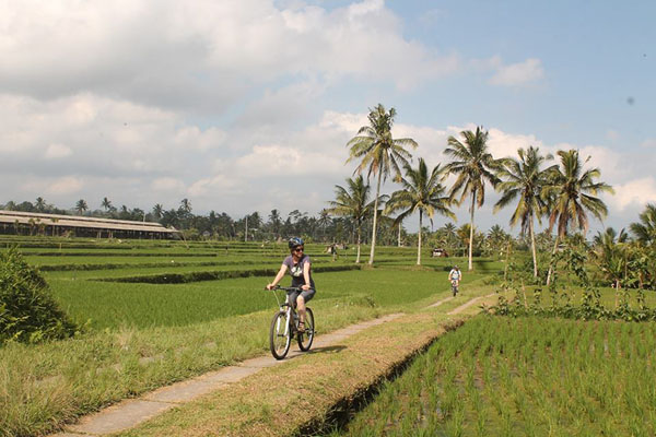 rice terrace, paddies, ubud village, ubud bike tour