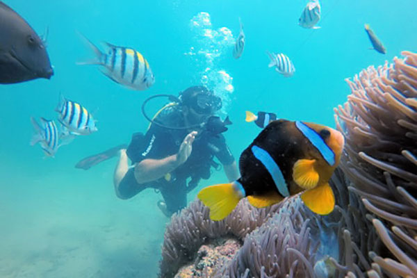 scuba diving, padi international