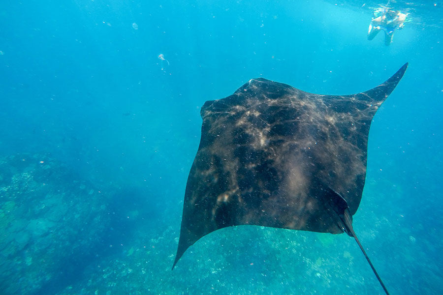 snorkeling at manta ray, nusa lembongan