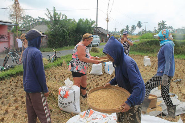 Stop and see local people harvest rice