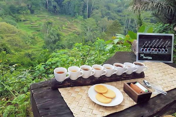 coffee plantation, tegallalang, bali