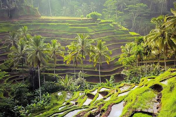 tegallalang rice terrace view