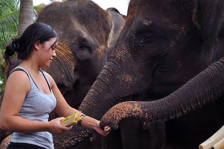 Touch and Hand Feed Elephants