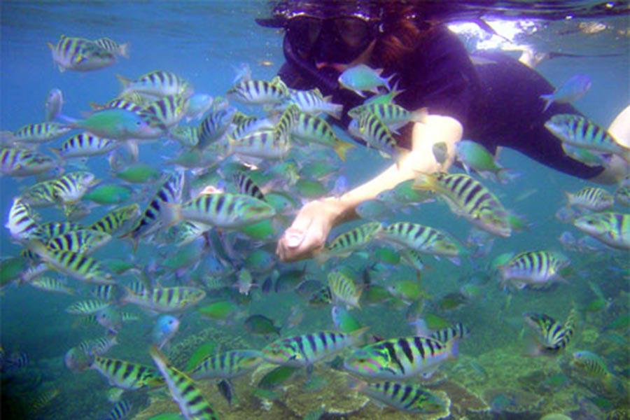 underwater view in lembongan, sugriwa lembongan tour