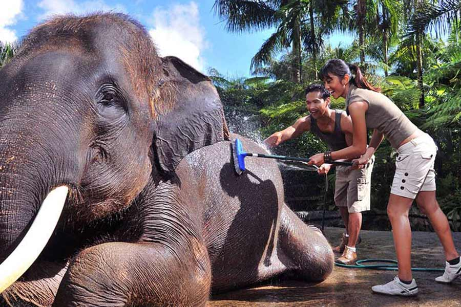 wash elephant, bathe and breakfast with elephant